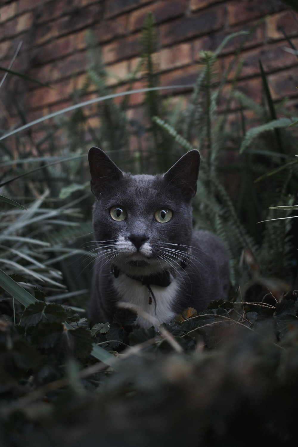 black and white cat on green grass during daytime