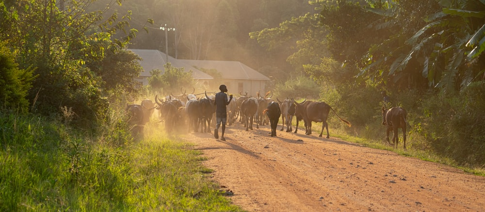 people walking on dirt road with horses during daytime