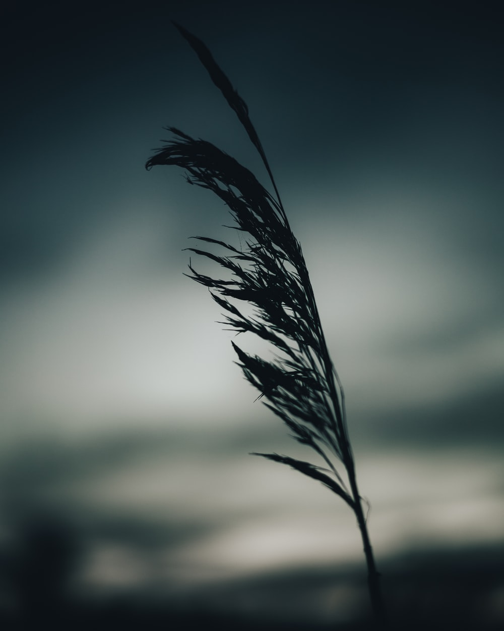 black feather in close up photography