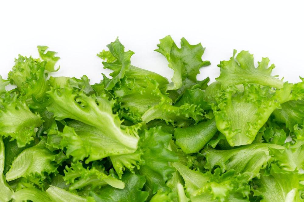 green vegetable on white background
