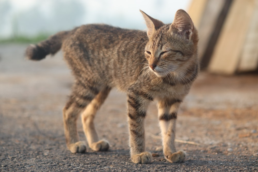 brown tabby cat on gray sand during daytime