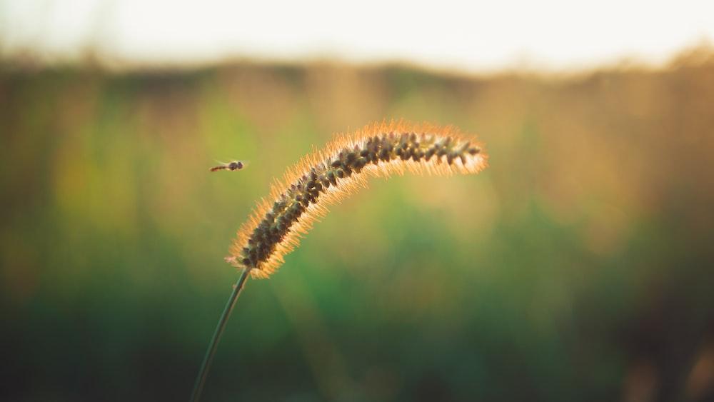 brown and black caterpillar on brown stem in tilt shift lens