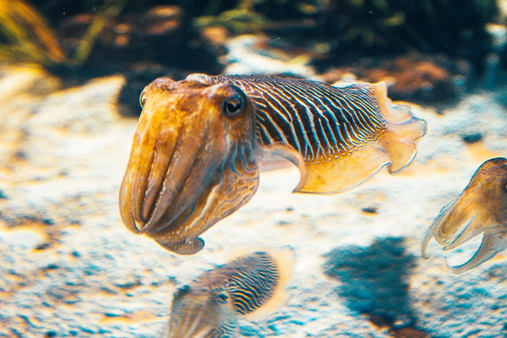 brown and white fish in water
