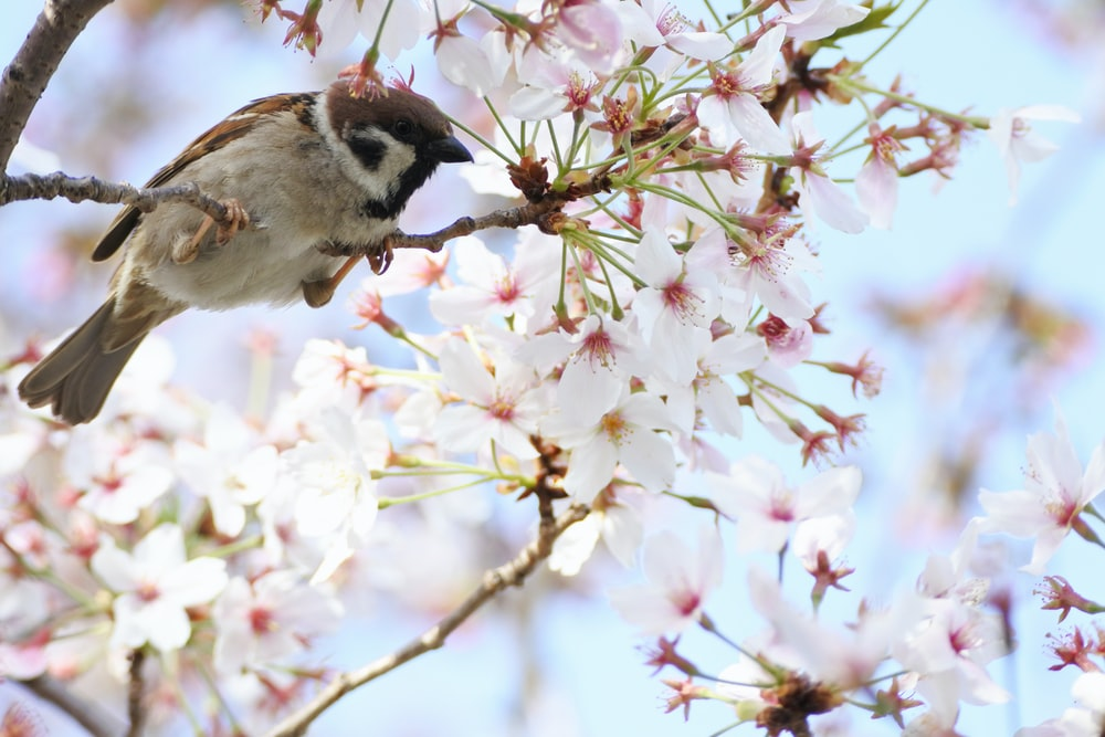 brown and white bird on white and pink flowers