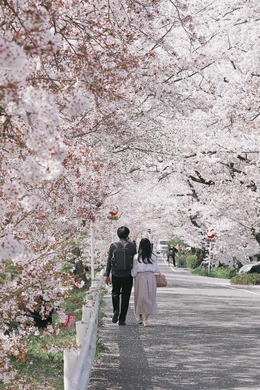 man and woman walking on road between cherry blossom trees during daytime