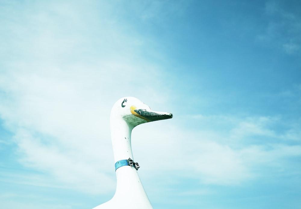 white bird under blue sky during daytime