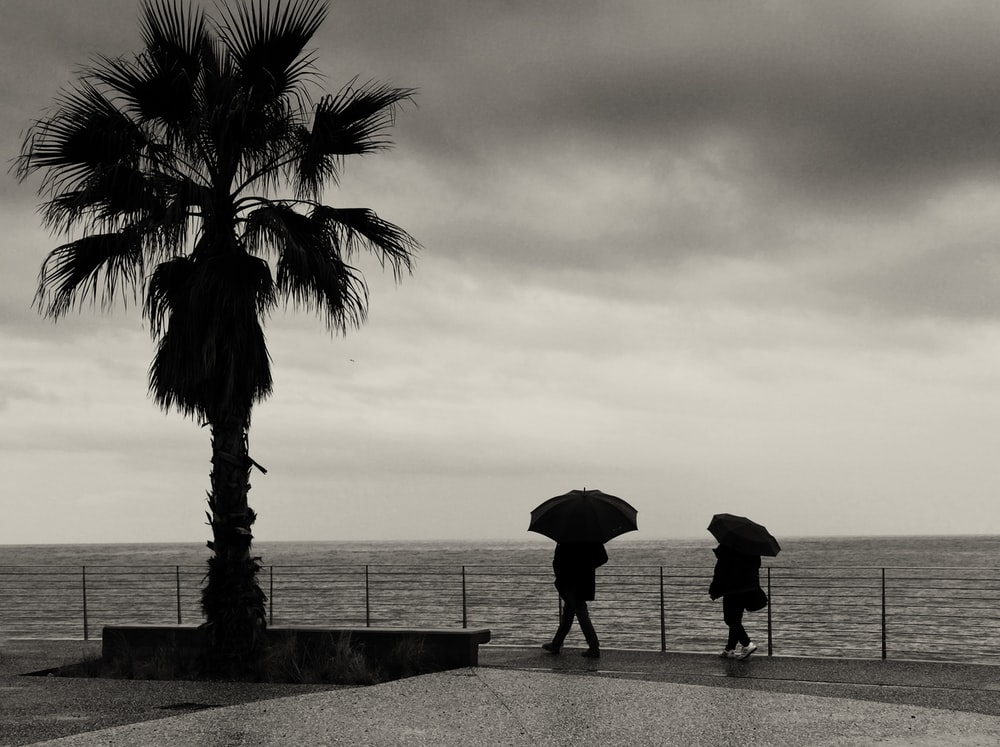 silhouette of person holding umbrella standing on concrete pavement near palm tree during sunset