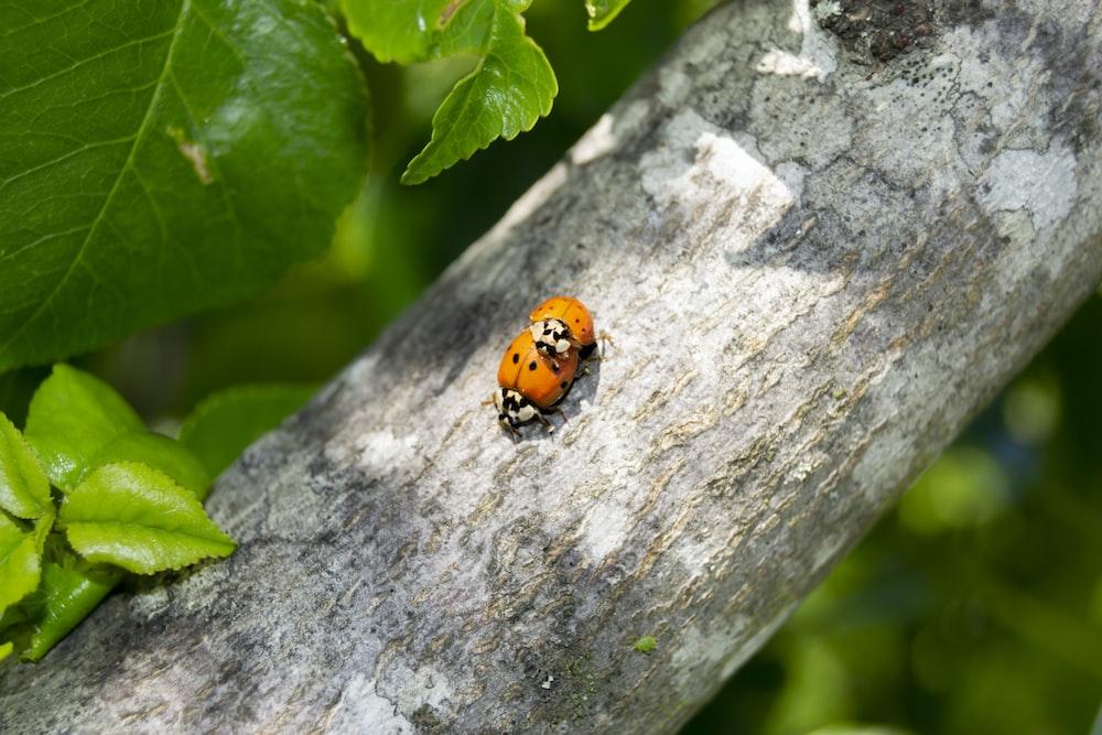orange and black ladybug on gray concrete wall during daytime
