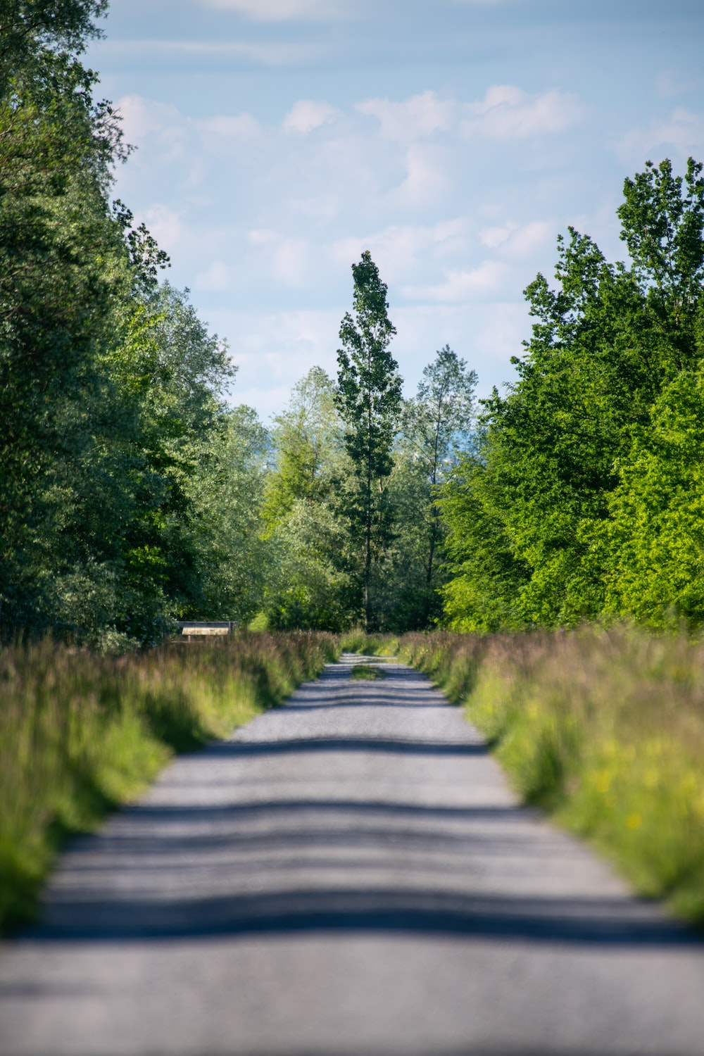 gray concrete road between green trees under white clouds and blue sky during daytime