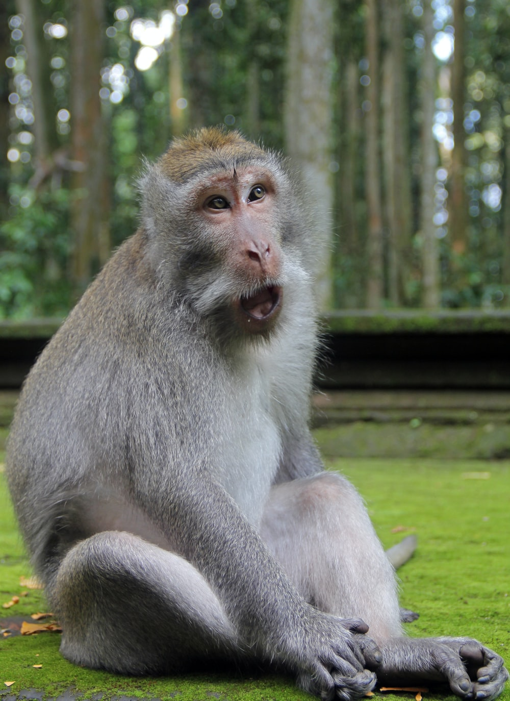 gray monkey sitting on green grass during daytime