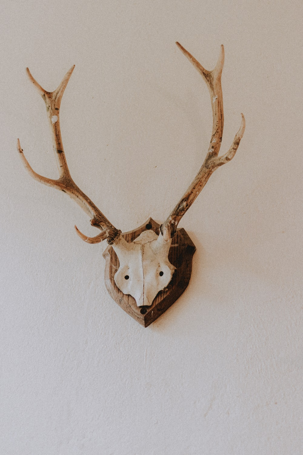 brown and white animal skull wall decor