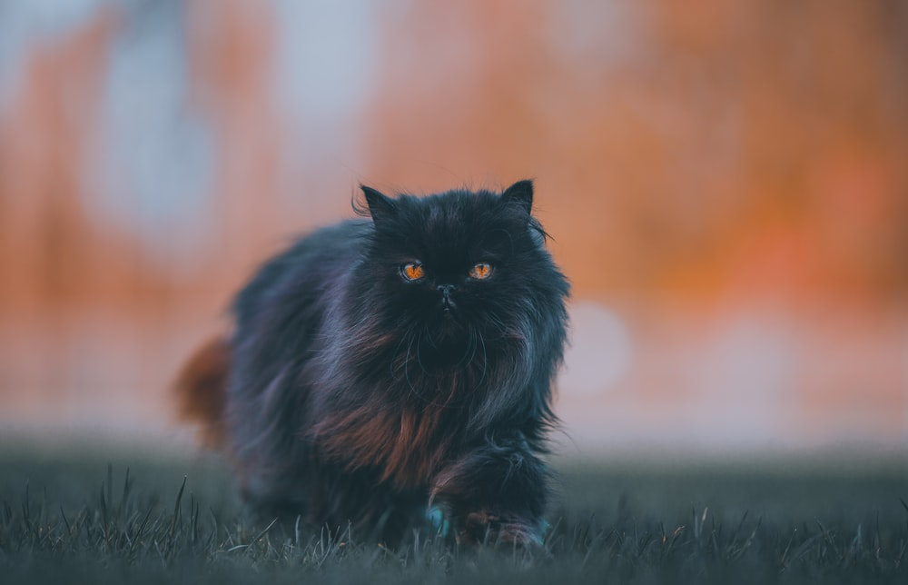 black and brown cat on green grass during daytime