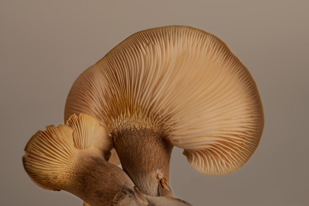 white and brown mushroom in close up photography