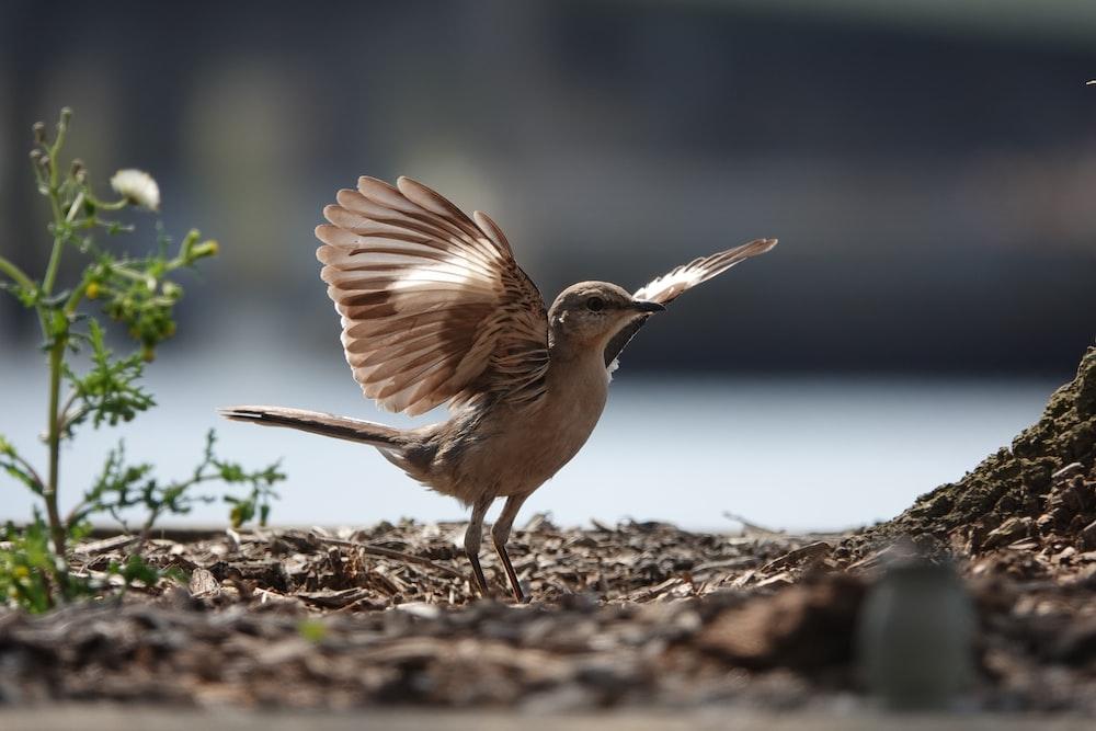 brown bird on brown soil