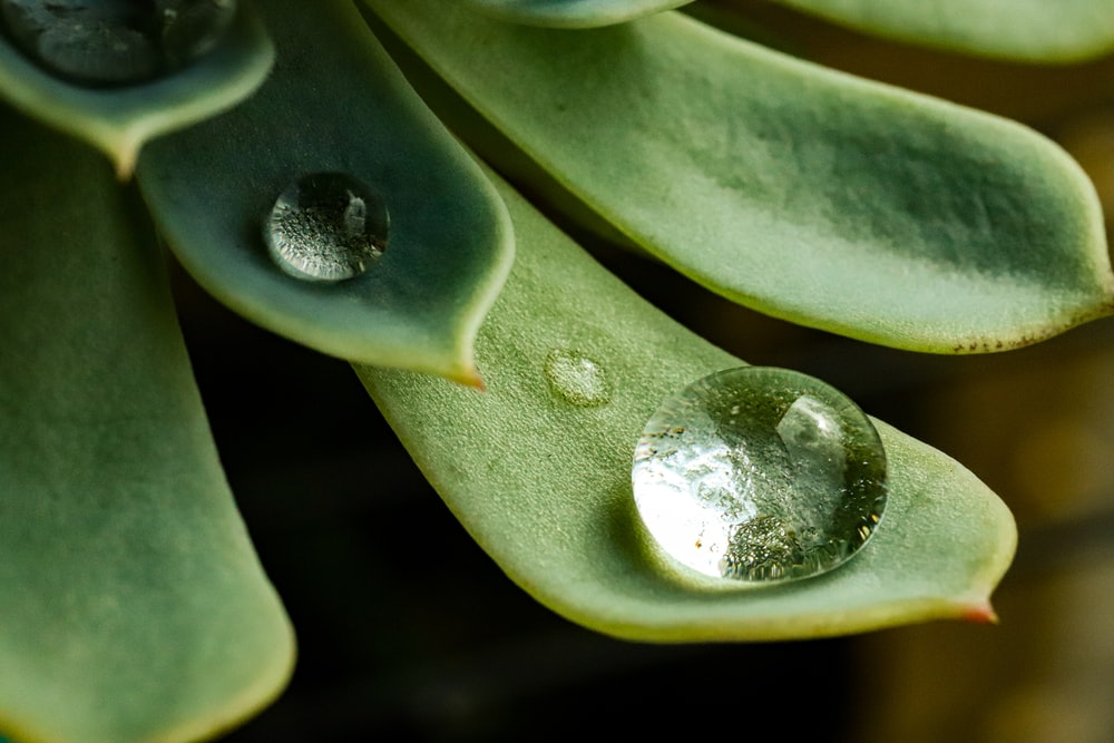 water dew on green plant