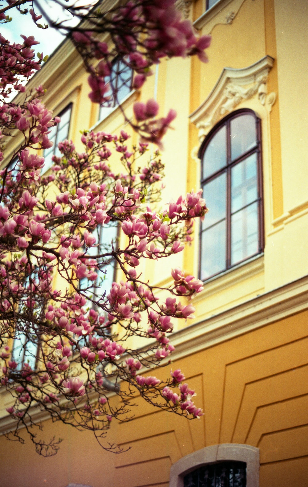 pink and white flowers on yellow concrete building