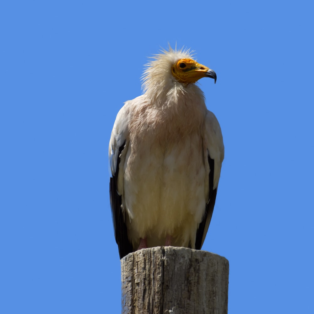 white and black bird on brown wooden post during daytime