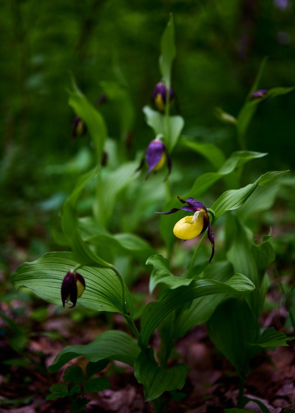 yellow and purple flower bud in tilt shift lens
