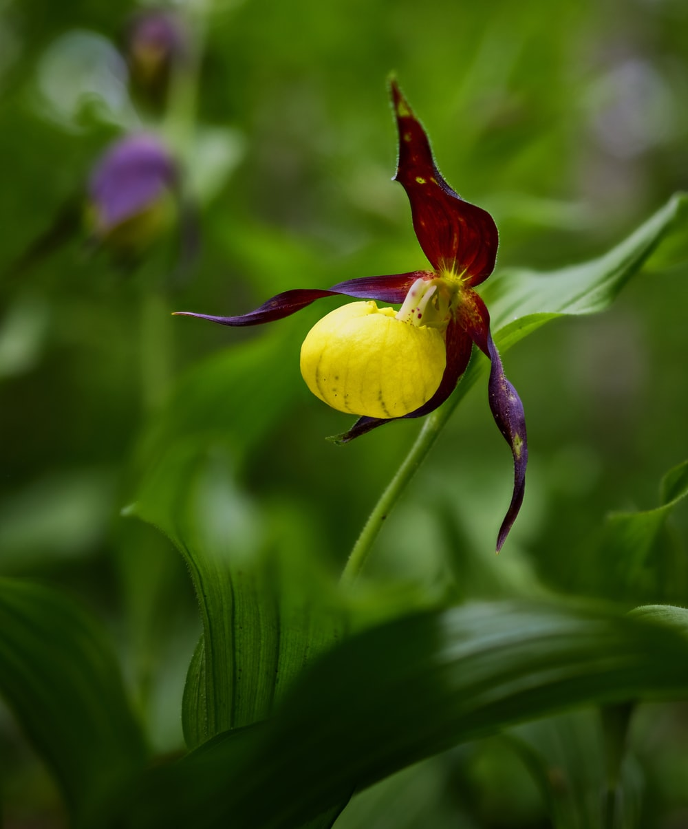 yellow and purple flower bud in close up photography