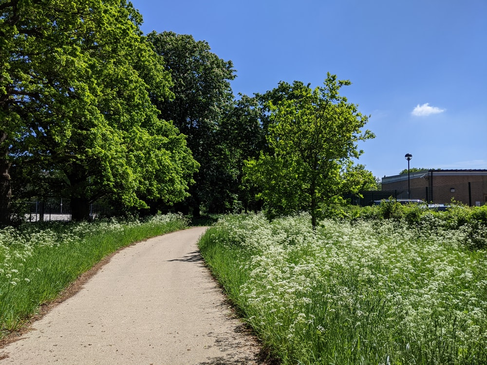 green trees and plants beside pathway