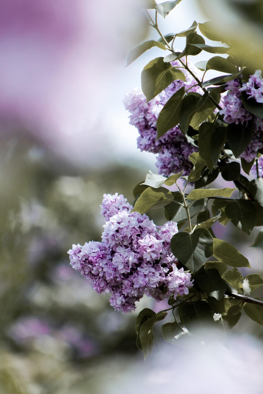 purple flower in tilt shift lens