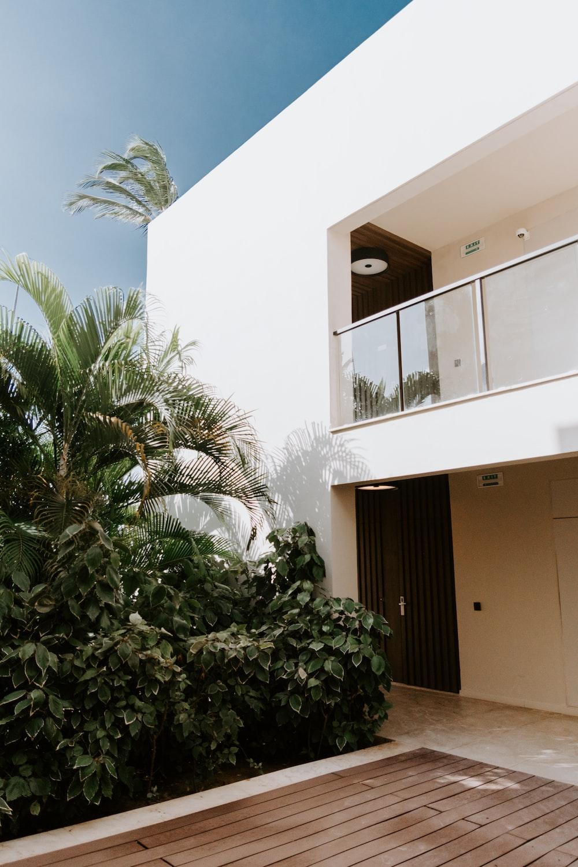 green palm tree near white concrete building