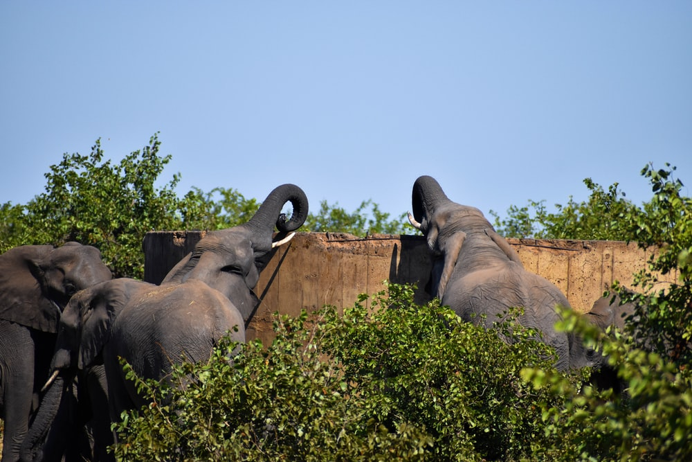 brown elephant on green grass during daytime