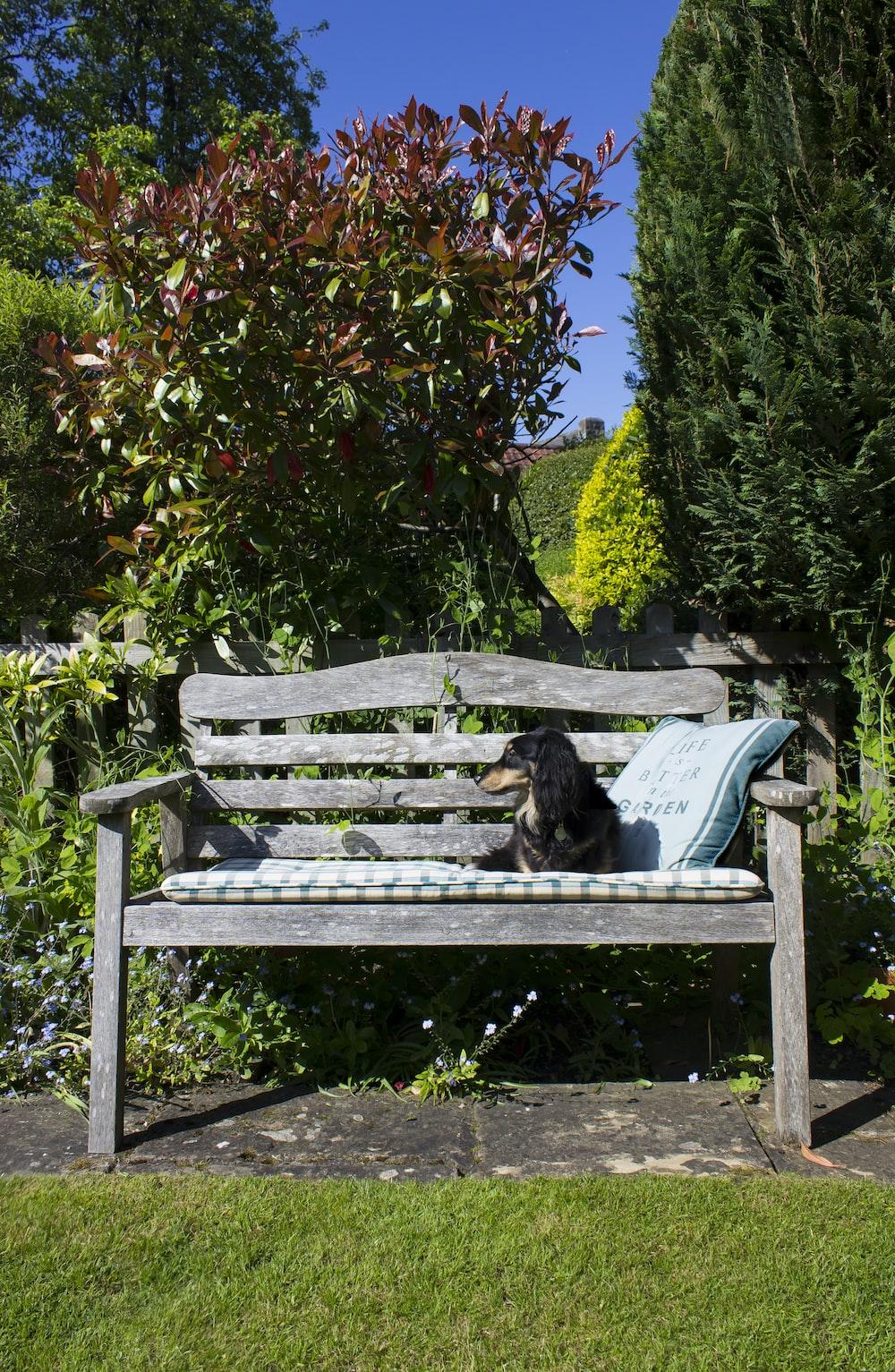 black labrador retriever lying on blue and white bench
