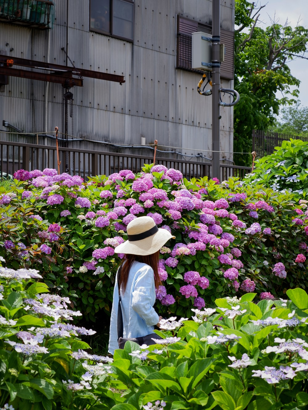 woman in white long sleeve shirt and brown hat standing in front of purple flowers