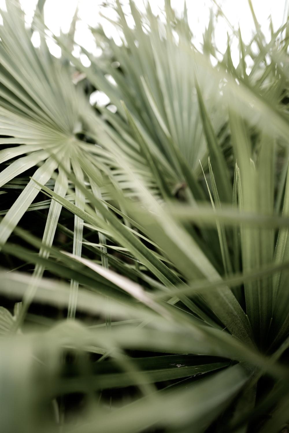 green grass in macro lens