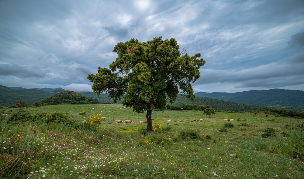 green tree on green grass field under white clouds during daytime