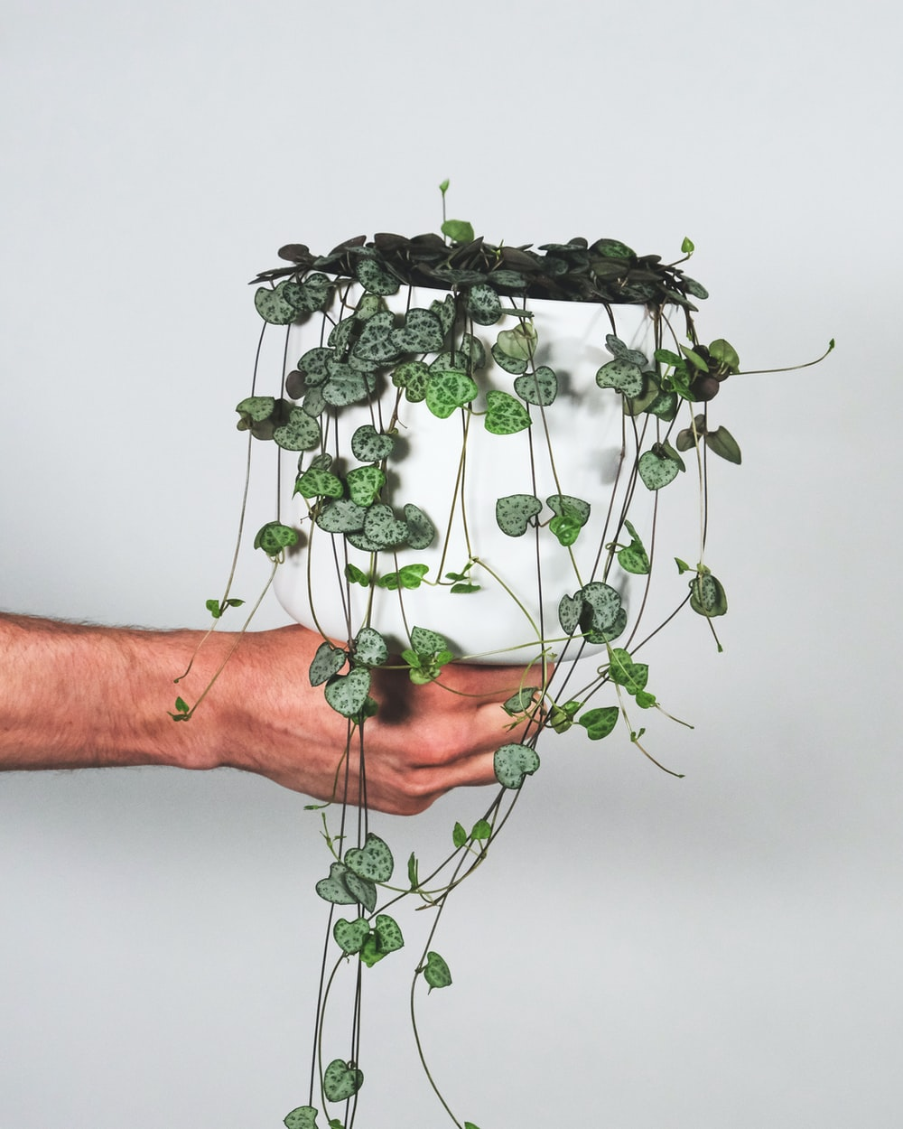 green plant on persons hand