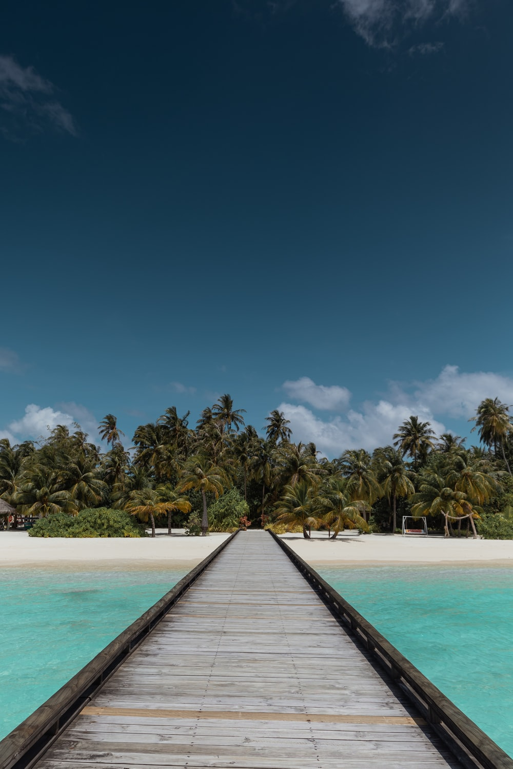 brown wooden dock near green palm trees during daytime