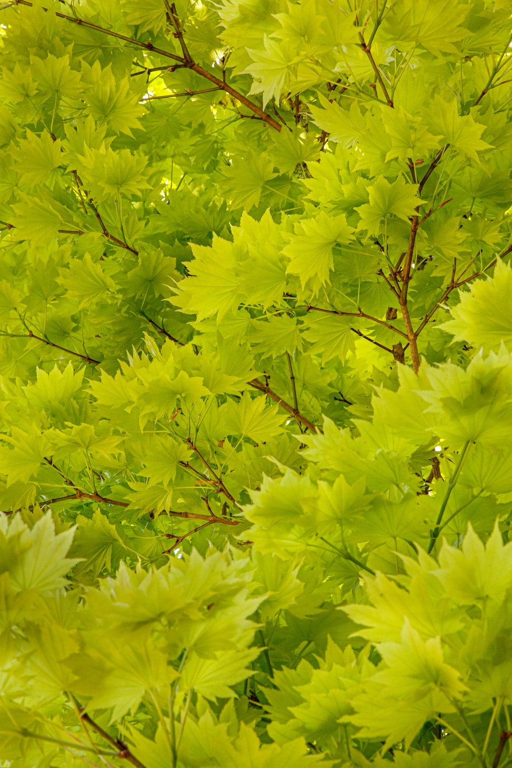 green leaves on brown tree branch