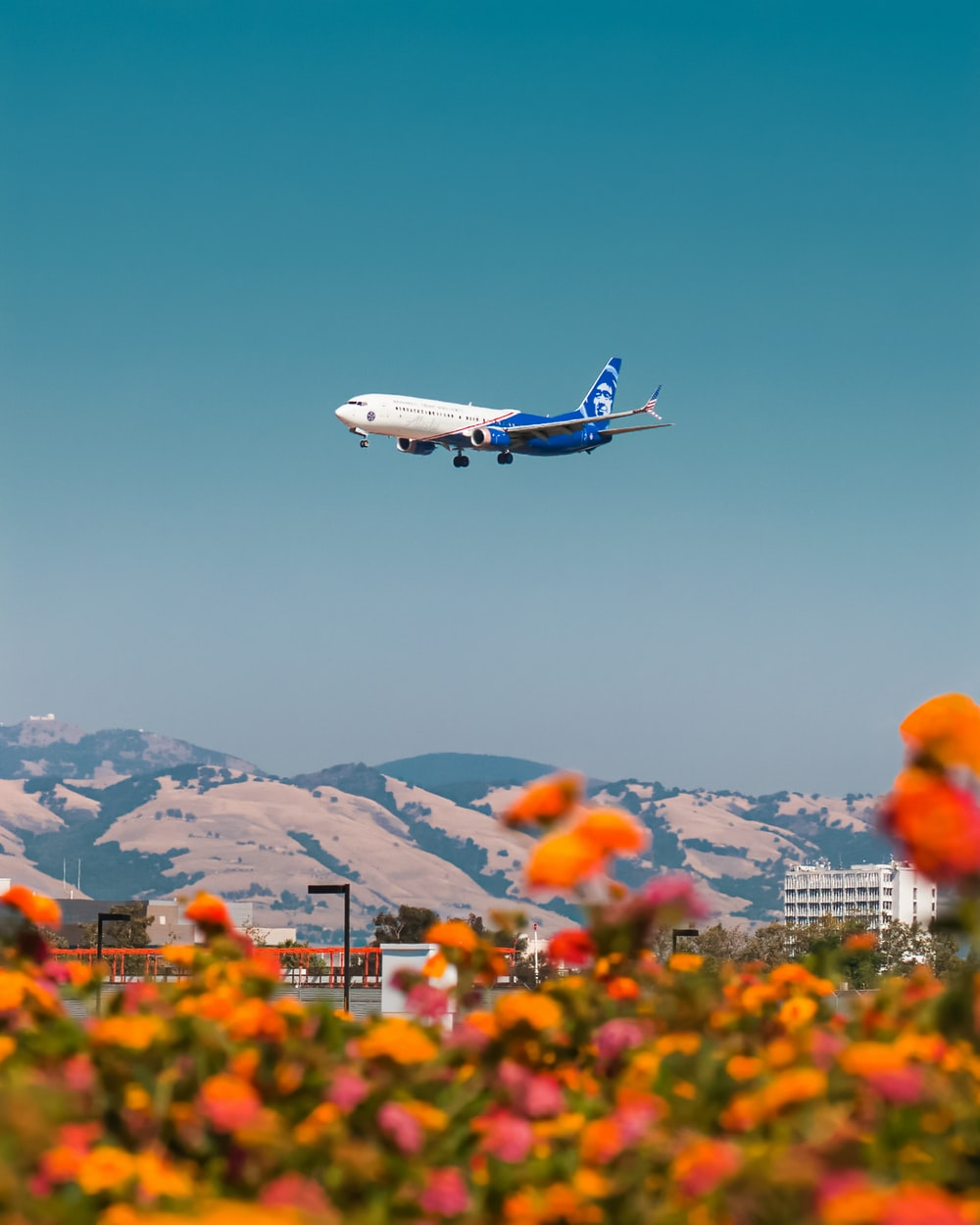 white and blue airplane flying over the orange flower field during daytime