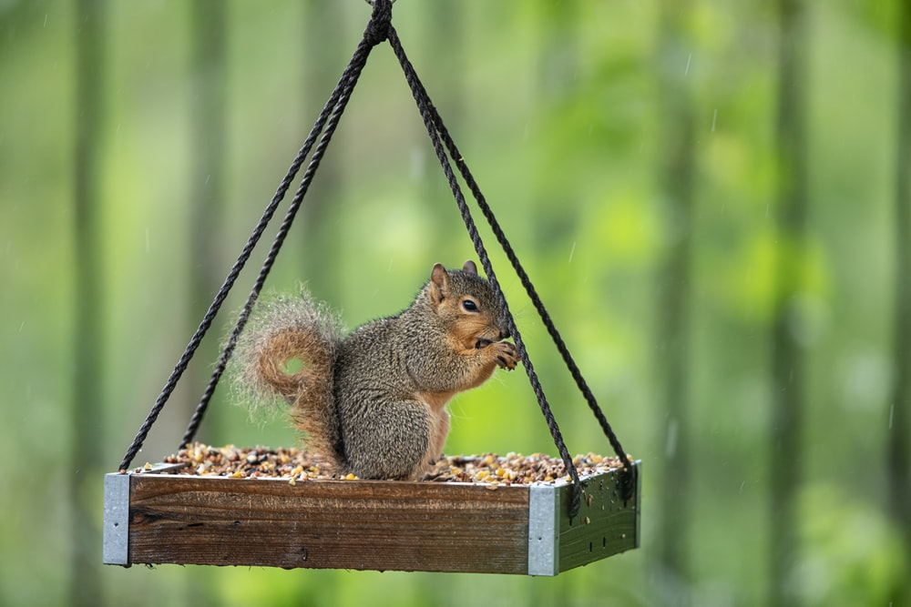 brown squirrel on brown wooden swing during daytime