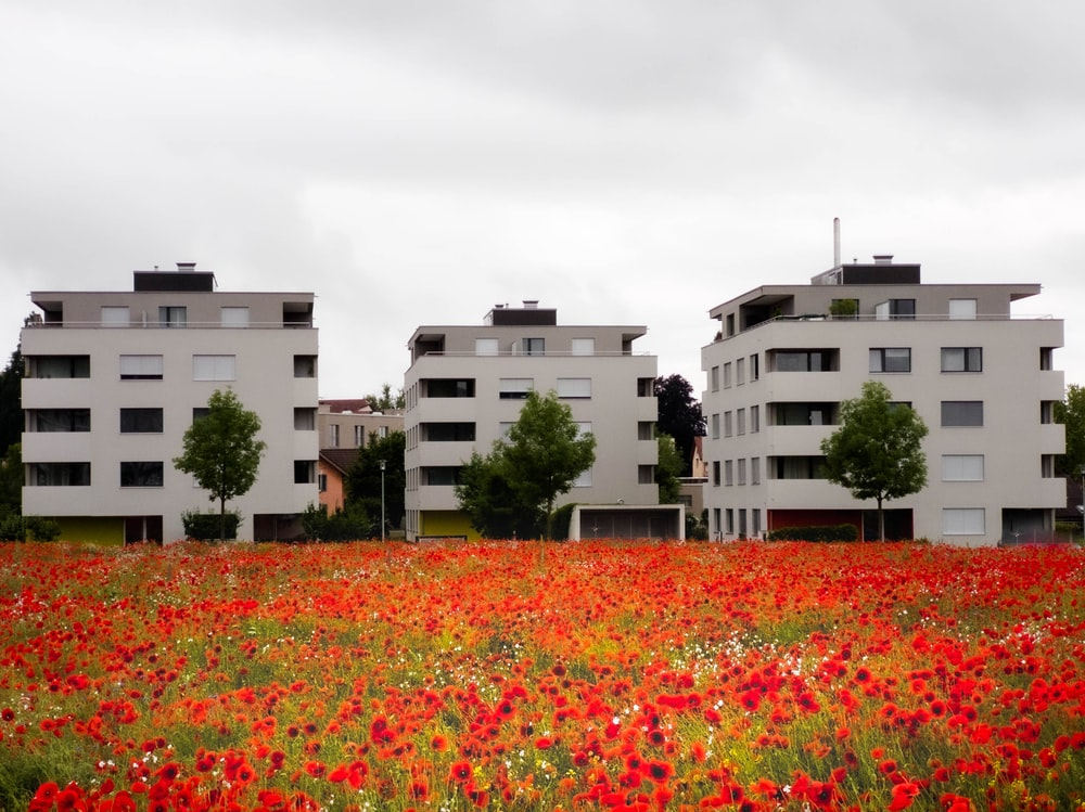 red flower field near white concrete building during daytime