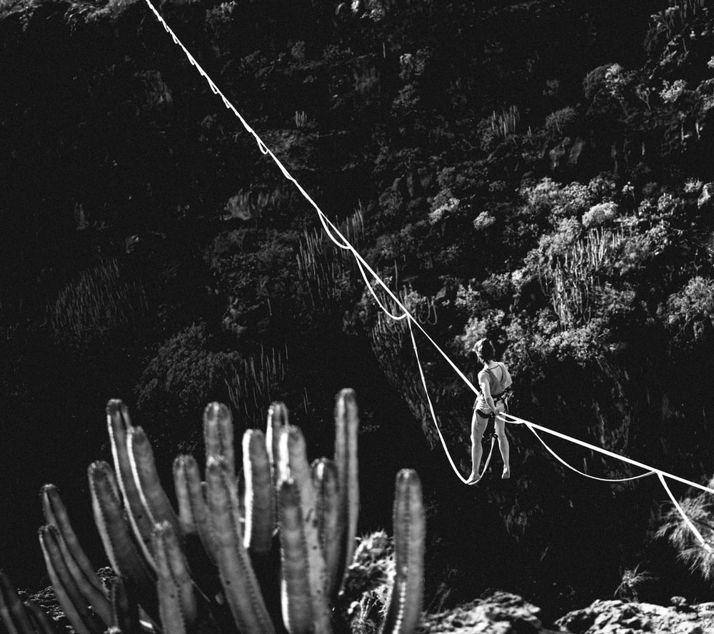 grayscale photo of cactus plant