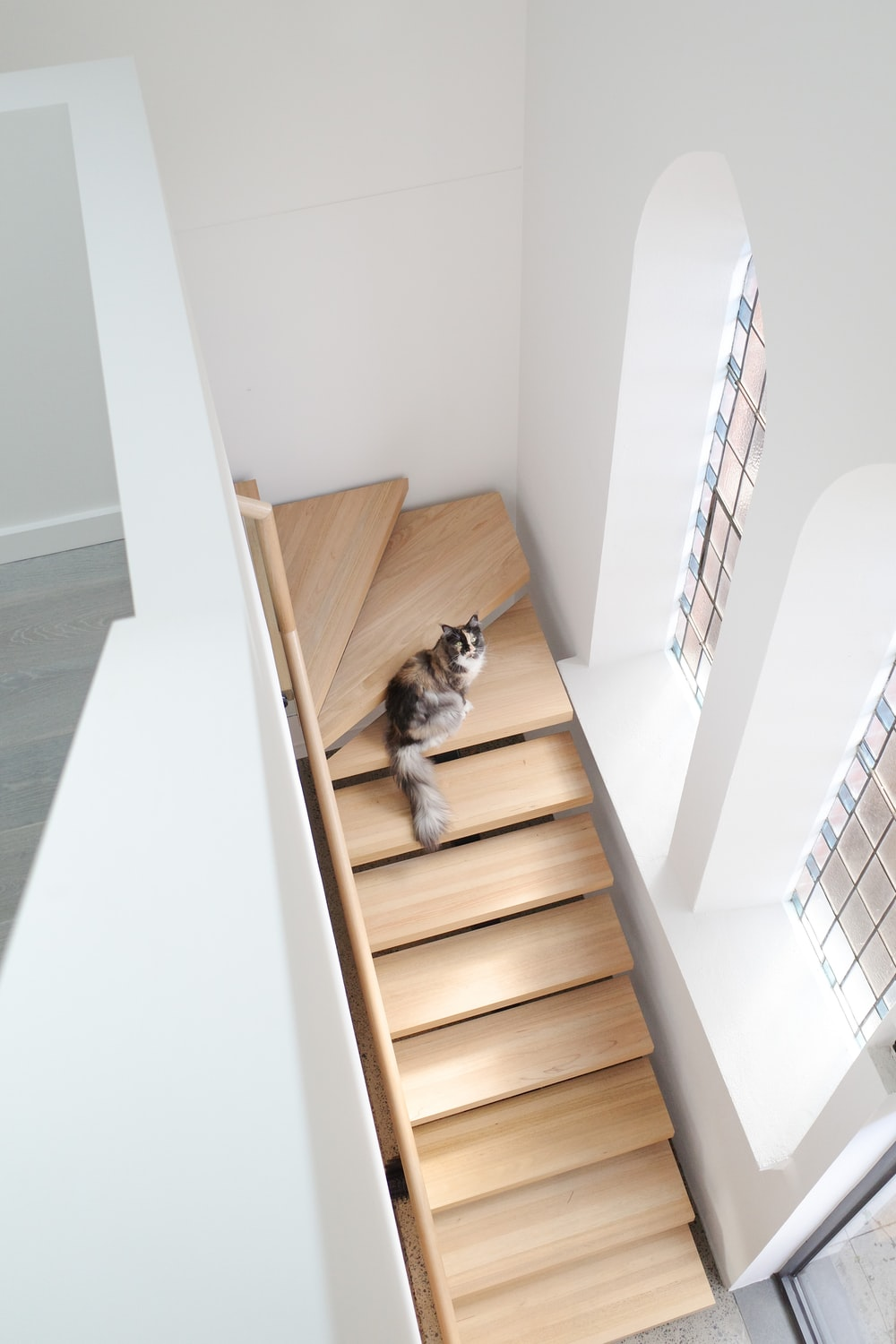 brown and white cat on brown wooden stairs