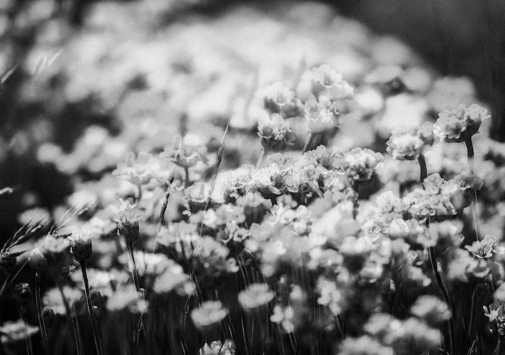 grayscale photo of flower field