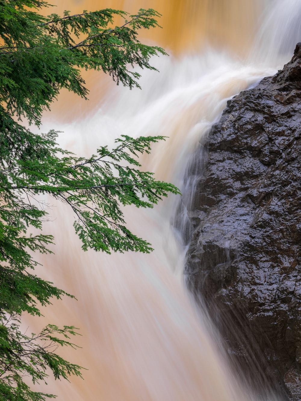 green tree near waterfalls during daytime