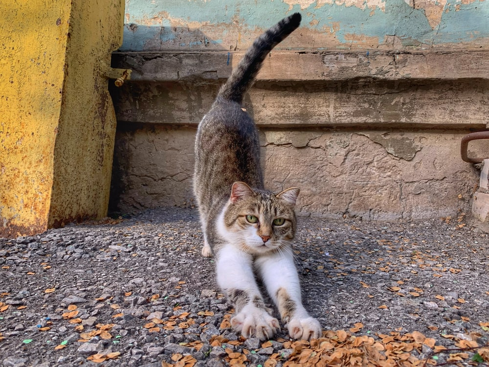 white and brown tabby cat sitting on gray concrete floor