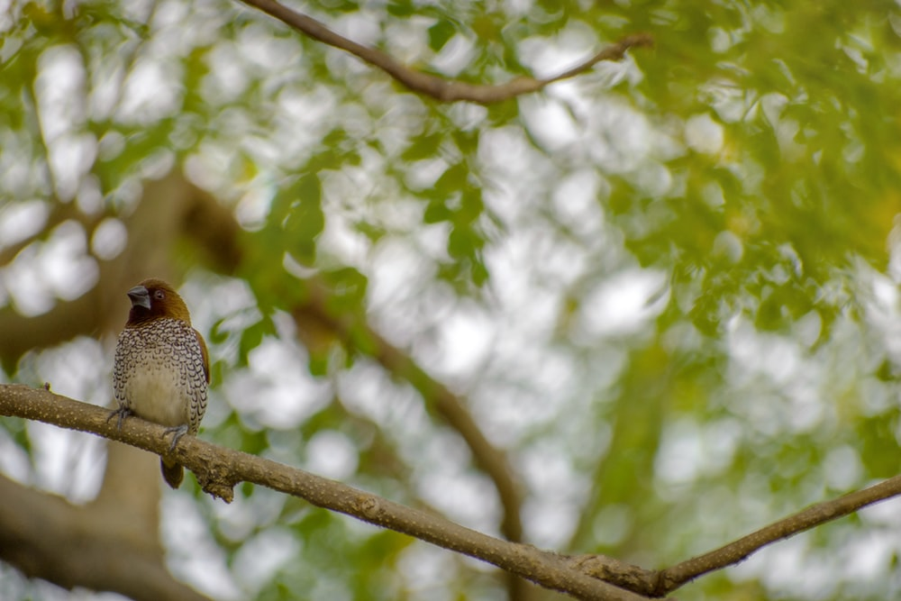 brown and white bird on brown tree branch during daytime