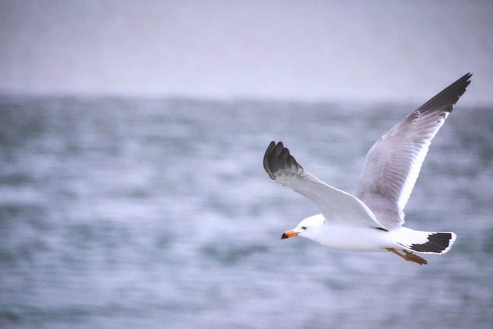 white bird flying over the sea