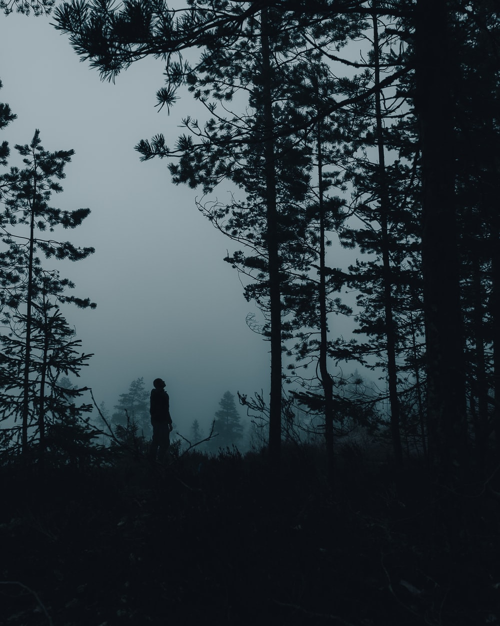 silhouette of person standing near trees during daytime