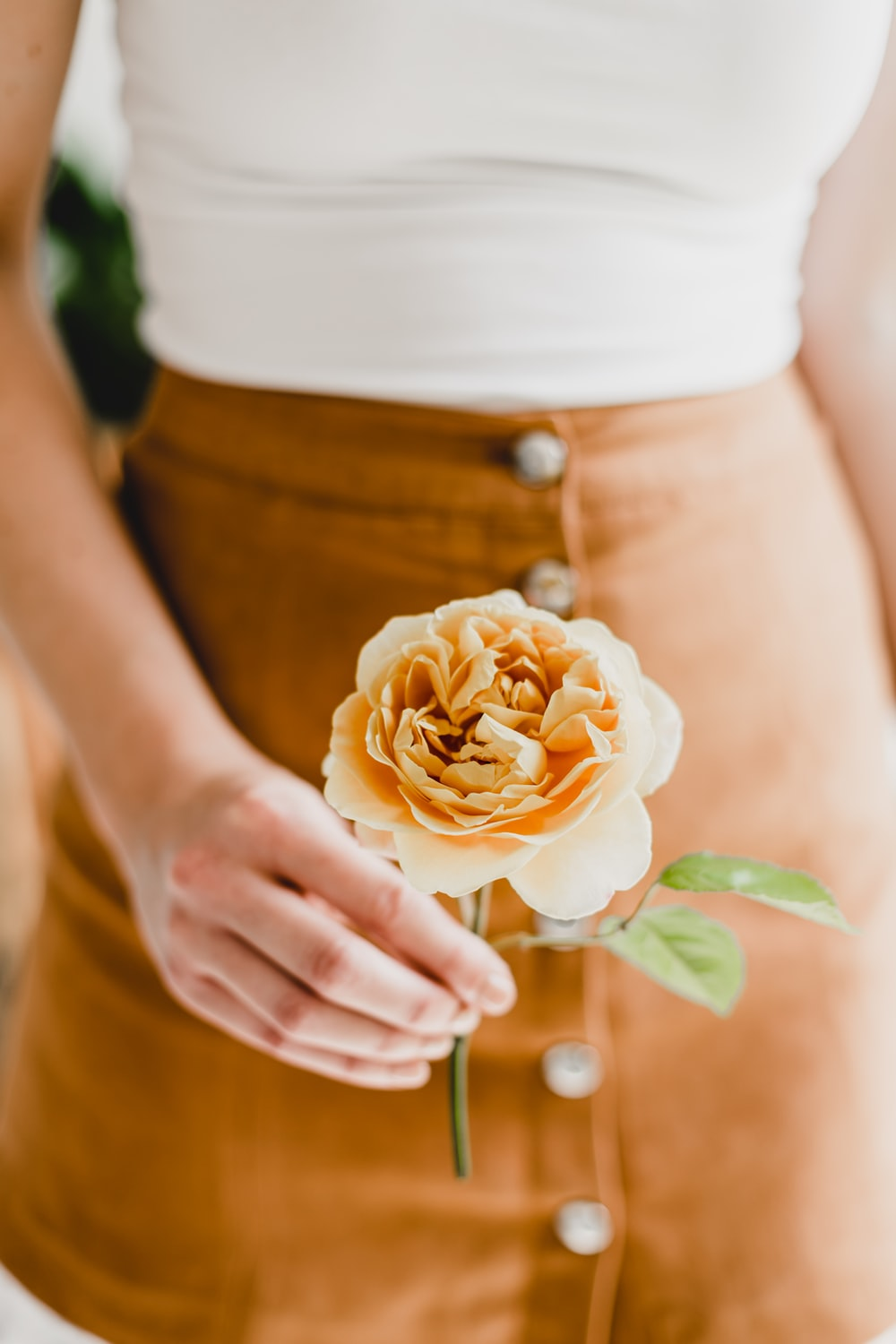 person holding white rose in close up photography