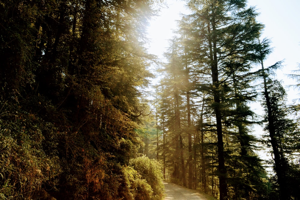 green trees on brown dirt road during daytime