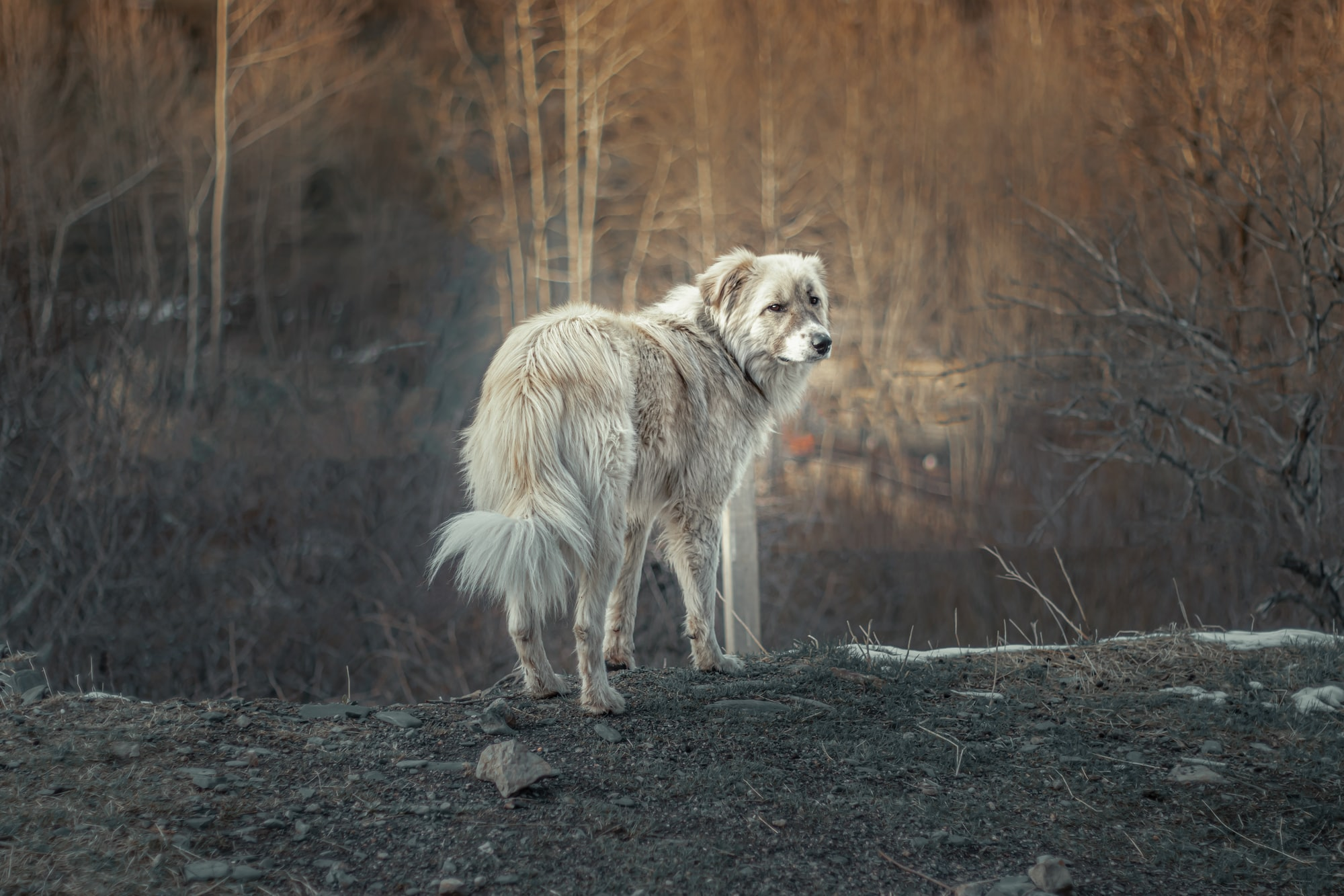 The Lost Dog