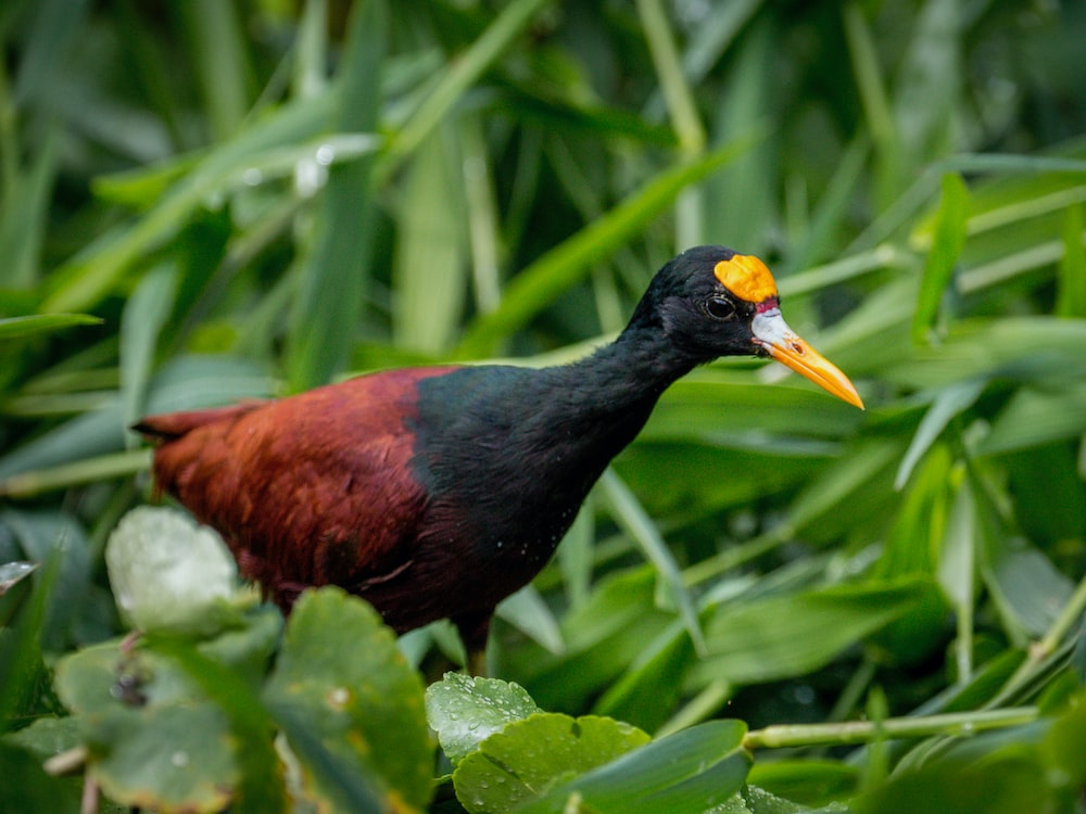 black and red bird on green plant