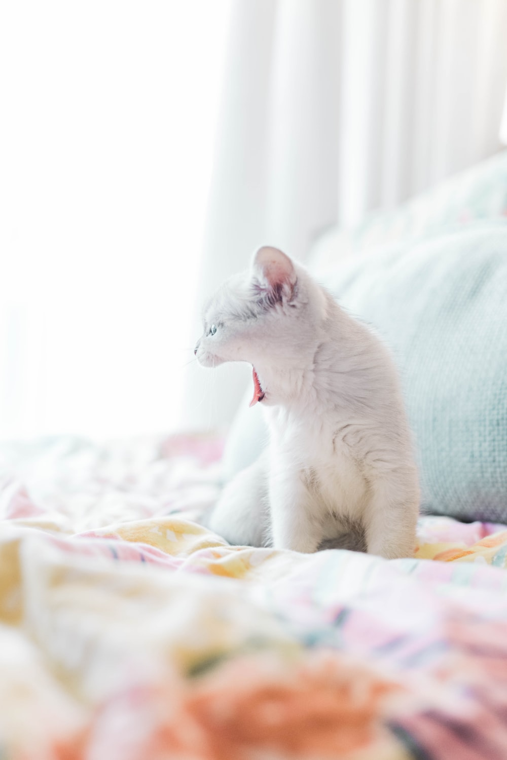 white cat on white and blue textile